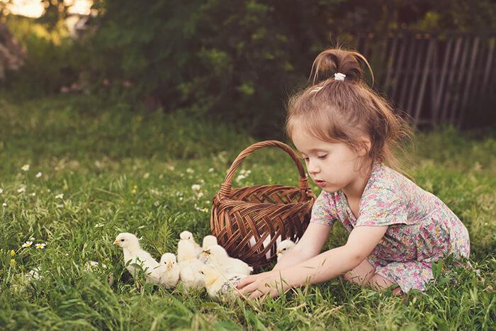 Poulailler et les enfants